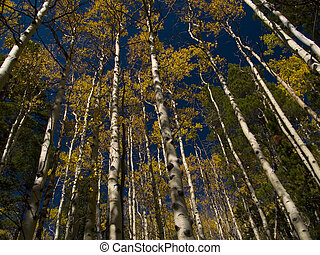 St. Vrain Mountain Autumn