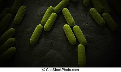 staaf, gevormd, bacterie