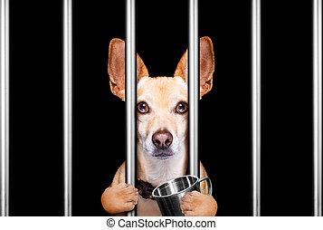 staaf, politie, achter, schuilplaats, dog, station, slecht, gevangenis, gedrag, gevangenis, crimineel, of