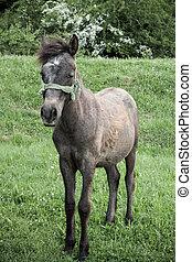 staand, bruin paard, weide, gele, flowers.