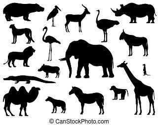 staand, silhouette, set, dieren, afrikaan