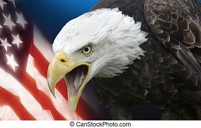 staaten, vereint, amerika
