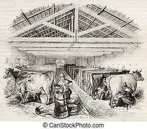 Stable old illustration. By unidentified author, published...