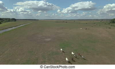 Stable. Horses graze on the territory of the stable. Aerial view.
