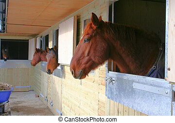 stabled, chevaux