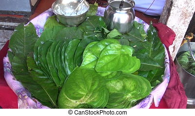 Stack of Betel leaves (Piper Betle)