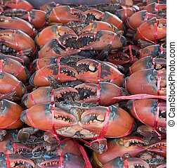 Stack of crabs, packed for sale