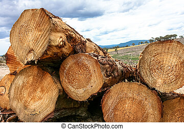 Stack of cut logs in forestry - Stack of cut pine logs in...