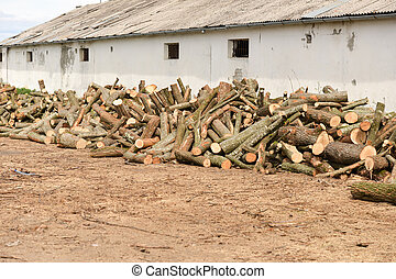 Stack of firewood near the wall of a old building