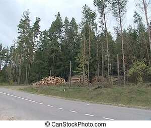 Stack of logs near coniferous forest. Storm ravage handling.