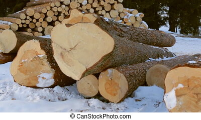 Stack of logs on snow