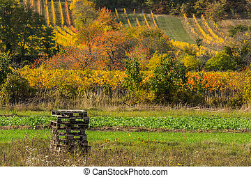 stack of pallets in the nature in colorful autumn