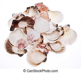 Stack of Seashells