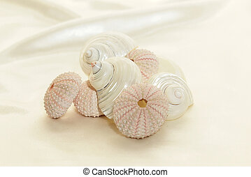 stack of shells