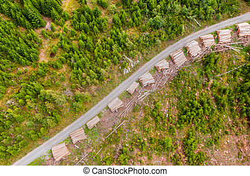 Stack of wood on a forest path from above
