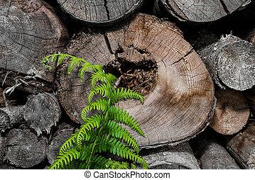 fire-wood with fresh fern