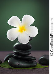 Stacked hot stones for massage spa and frangipani with green background