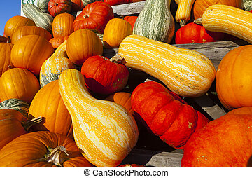Many different ornamental gourds - Stacked Many different ...