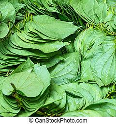 stacks of betel leaves. - Green betel leaf at the market.