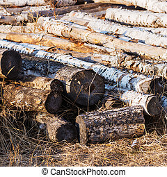 Stacks of birch logs.