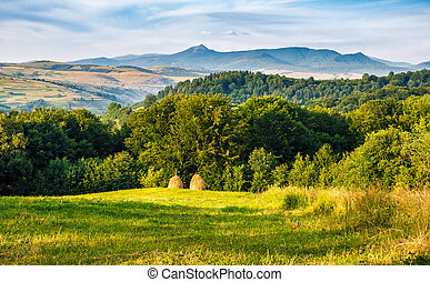 stacks of hay on the hill side - agricultural field on a...