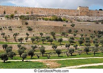 stad, dal, gammal, vägg, terrasserar, jerusalem, kidron