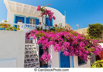 stad, -, fira, bougainvillea, santorini eiland, bloemen