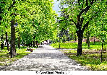 stad park, groene