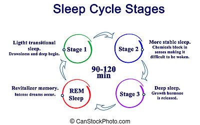 stadien, schlaf, zyklus
