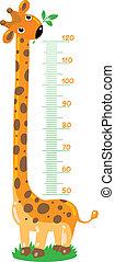 stadiometer, girafe