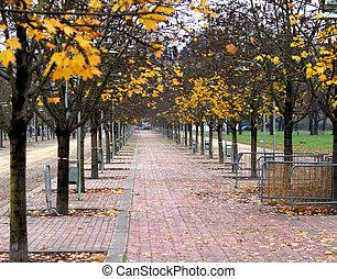 stadt, blätter, park, bäume, herbst, fallender