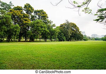 stadt, groß, park, feld, grünes gras