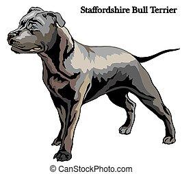 Staffordshire Bull Terrier vector illustration - Portrait of...