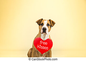 """Staffordshire terrier puppy poses in colorful yellow studio background with valentine's day sign on shoulders. Lovely young pitbull terrier dog with """"free kisses"""" paper heart."""