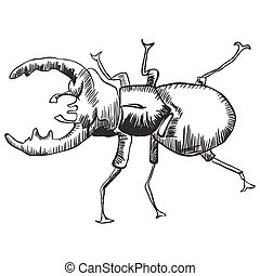 stag beetle black and white illustration