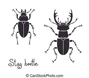 stag-beetle, ciervo, lucanus, cervus, hembra, escarabajo, ...