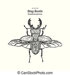 Stag beetle, hand draw sketch vector.