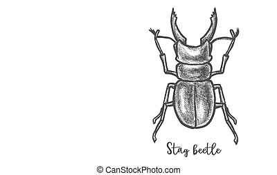 Stag beetle sketch or cervus lucanus vector illustration. Hand drawn horned bug with jaw. Antler sketching. Wildlife giant pest animal.. Entomology and biology, zoology and fauna theme.