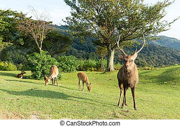 Stag Deer in Mount Wakakusa