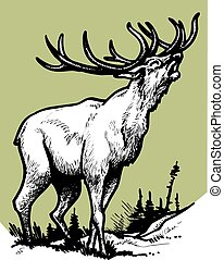 stag isolated on the green background - big stag isolated on...
