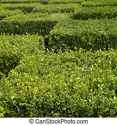 Green ttaggered trimmed hedge top cubes