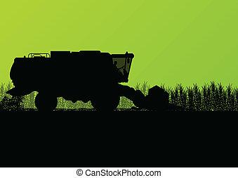 stagionale, mietitore, scena, illustrazione, campo, vettore, grano, fondo, agricolo, combinare, agricoltura, paesaggio