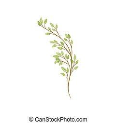 stagionale, pianta, growth., albero, fondo., ramo, bianco