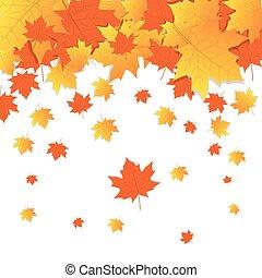 stagione, foglie, giallo, autunno, fondo, cadere, acero