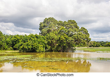 Stagnant swamp in rainforest - Swamp in middle of rainforest...