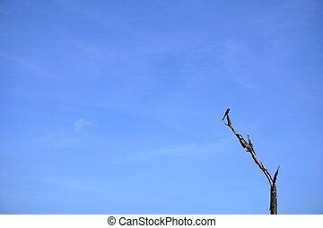 stain alone bird with the blue sky 3