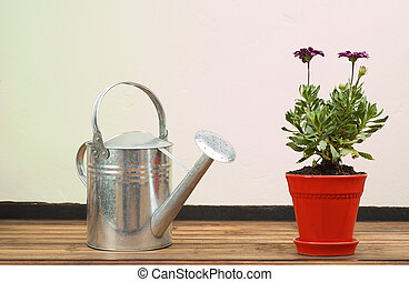 Stainless Steel Watering Can Standing Next to Red Potplant...