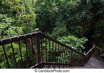 Staircase overlook the canopy of  Australia