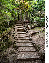 Stairs Cut Through Oregon Forest