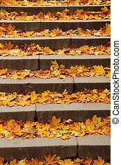 Stairs filled with colourful autumn leaves